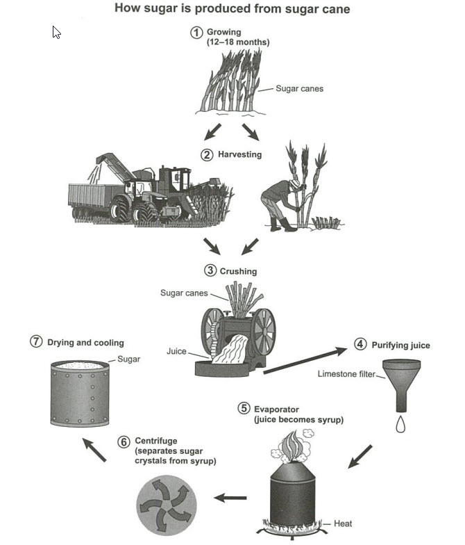 The diagram below shows the manufacturing process for making sugar from sugar cane