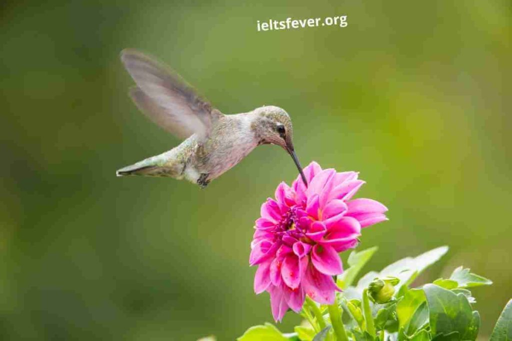 Birds IELTS Speaking Part 1 Questions With Answer (1)